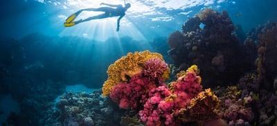 Arrecifes ¿por qué preservarlos?